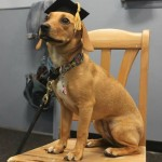 Annie graduates from puppy group class!