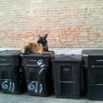 dog on garbage cans