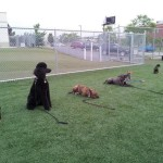 outdoor group dog training class