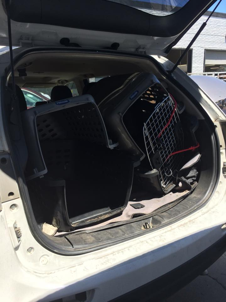 My plastic kennels after nearly direct impact to their location inside my car. The crate with the red bungees across the door was empty at the time of the accident.
