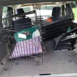 car accident dog crate
