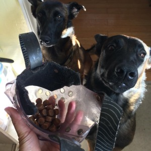 Put food or treats inside the muzzle for your dog to eat out of.
