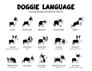 Lili-Chin-Doggie-Language-1