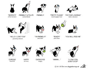 Lili-Chin-Doggie-Language-2