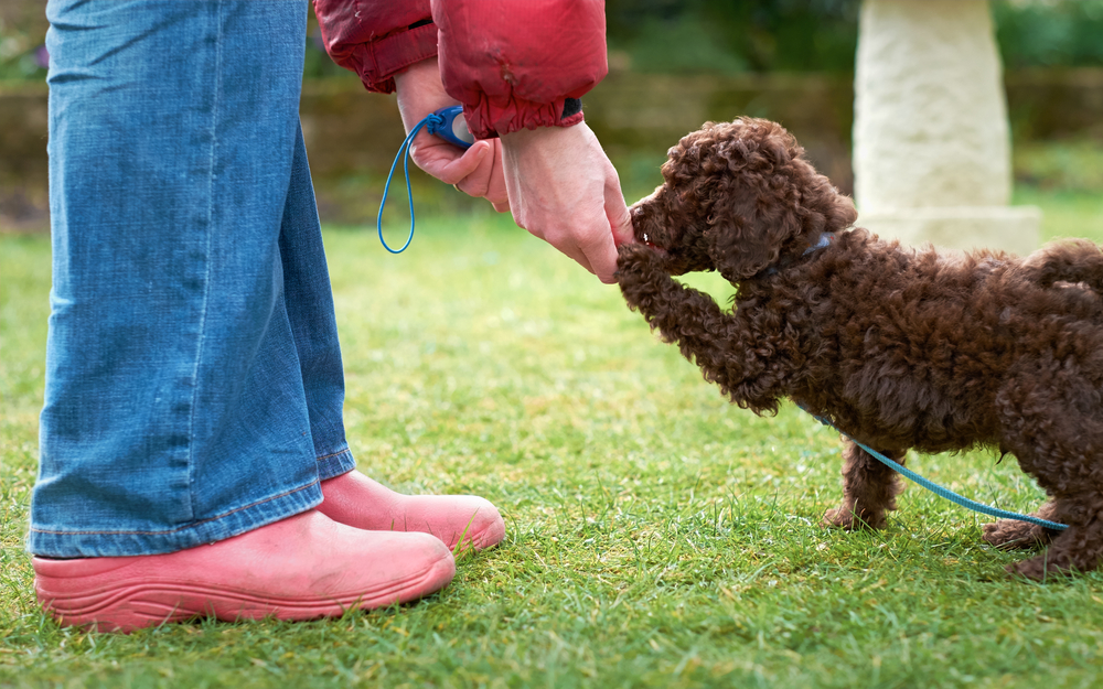 Choosing the best puppy training