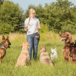 Are dog bootcamp programs effective?