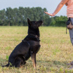 How to deal with resource guarding in dogs