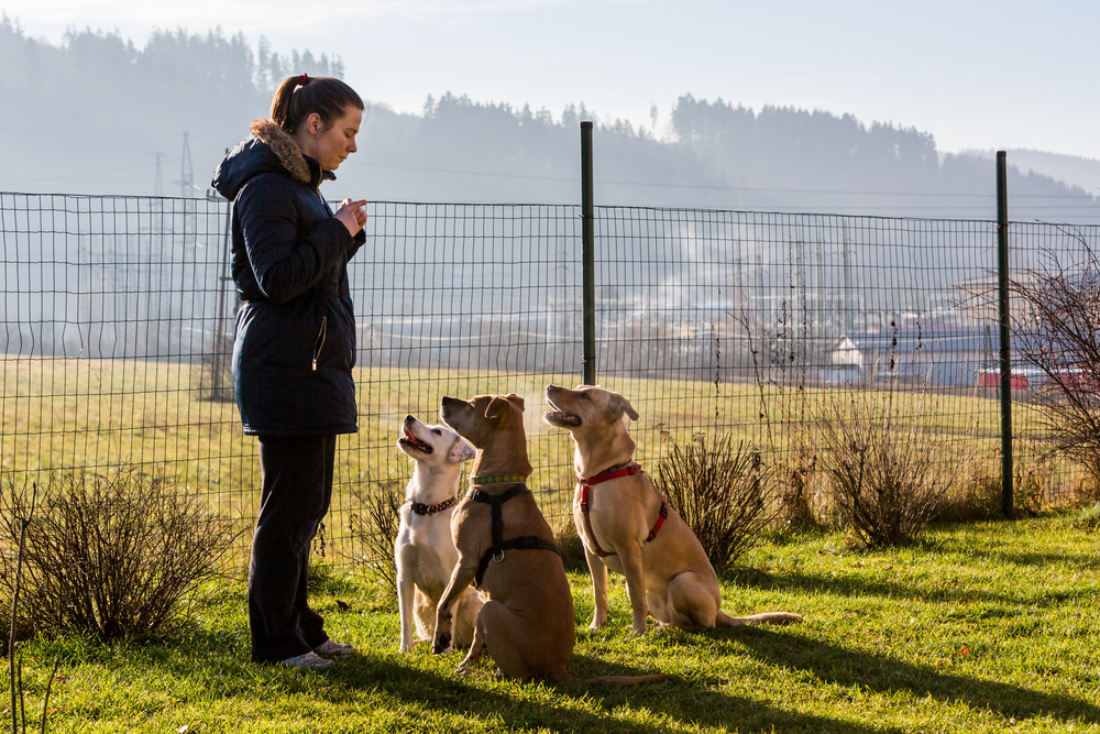 How dog training can help you